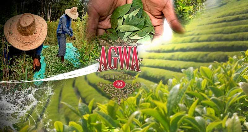 Bolivian Coca Leaf Alcohol